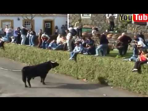 Những pha trêu chọc bò tót hài hước Lễ hội bò tót ở Tây Ba Nha
