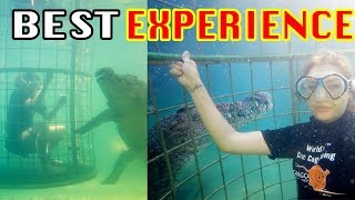 CROCODILE cage diving at Cango Wildlife Ranch