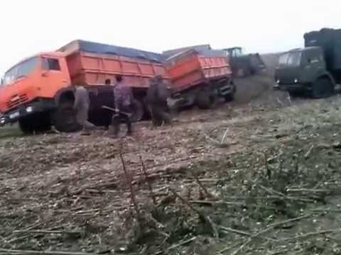 Камазы на Уборке Урожая (Камаз Чуть не Лег на Бок) // KAMAZ Almost fell on the Side