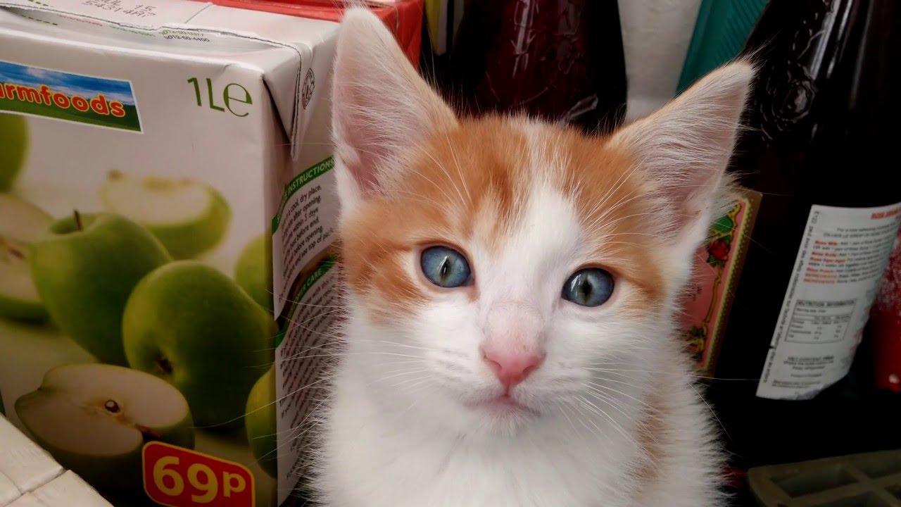 Aww So Cute Kitten With Blue Eyes 4k Ultra Hd 2160p