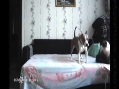 Смешное видео про животных. -