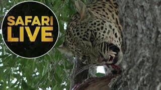 safariLIVE - Sunset Safari - July 21, 2018