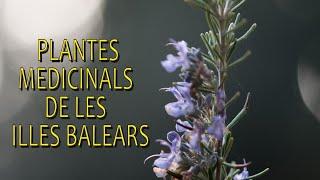 Plantes medicinals de les Illes Balears