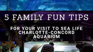 A Look at My Family Visit to SEA LIFE Charlotte Concord