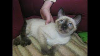 Как выбрать имя кличку коту кошке Как назвать кота кошку  ИМЕНА ДЛЯ КОТОВ КОШЕК