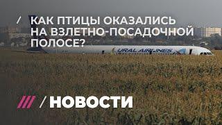 Что случилось с самолетом? Объясняет авиаорнитолог