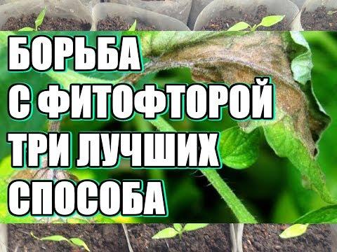 Какие овощи не болеют фитофторой