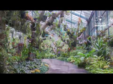 The Beautiful Orchids of Bogor Botanical Garden
