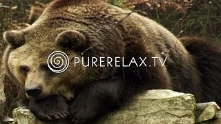 Nature Videos - Forest Sounds, Bears, Birds, Harmony - ANIMALS IN THE FOREST screenshot 2