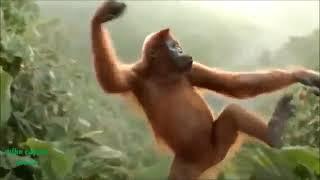 Funny Ape Song  Cartoon Parody  Dance Music Pop