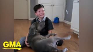 Emotional video of boy reuniting with dog missing for 2 months | GMA