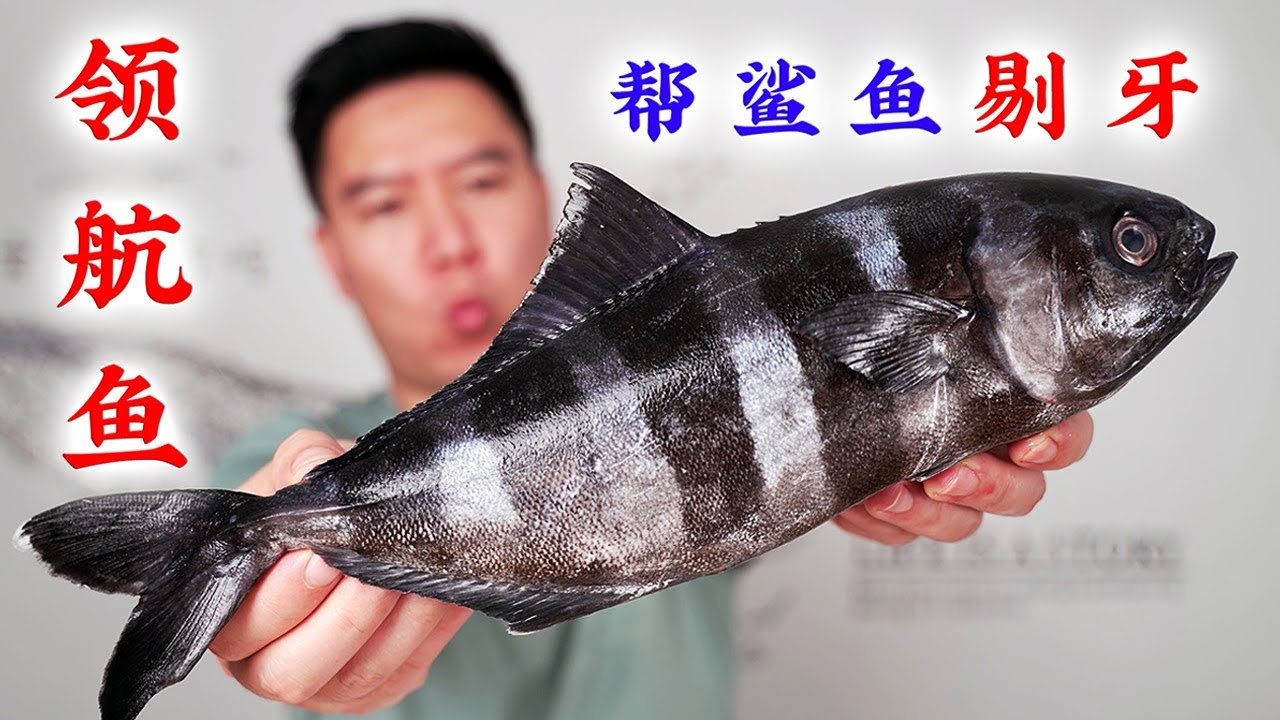 全网首吃百年一遇的领航鱼,连鲨鱼都要保护它,出锅后翻车了【小文哥吃吃吃】