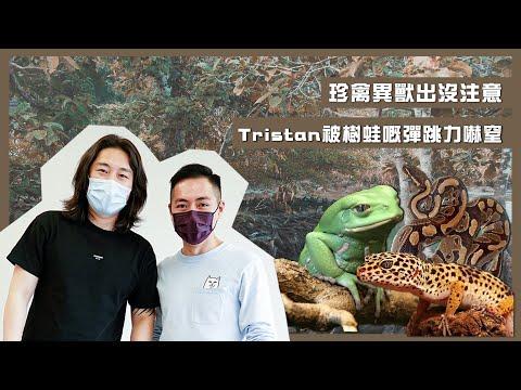一家大晒Tristan被樹蛙🐸嘅彈跳力嚇窒!
