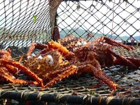 Alaskan King Crab Fishing - The Profit and Sorrow - Fishing TV HD
