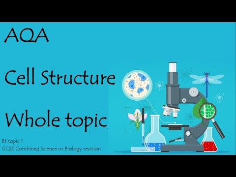 The whole of CELL STRUCTURE. AQA Biology or combined science 9-1 revision for paper 1