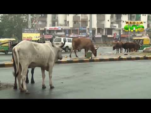 Cow slaughter: Supreme Court rejects PIL seeking all India ban