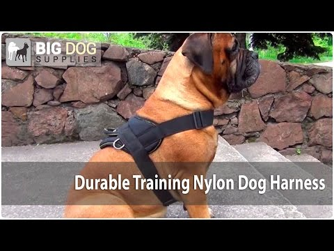Durable Nylon Dog Harness for Training on Bullmastiff