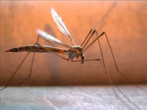 DJ aligator Mosquito original mix