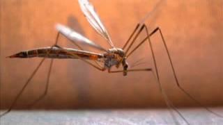 [3.46 MB] DJ aligator Mosquito original mix
