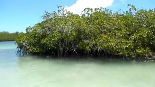 Доминикана Пунта кана 2015 год видео(Путешествие по Доминиканской республике Пунта кана 2015 год., 2016-03-16T13:57:23.000Z)