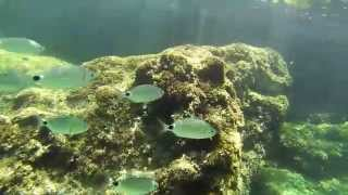 Snorkeling Majorca