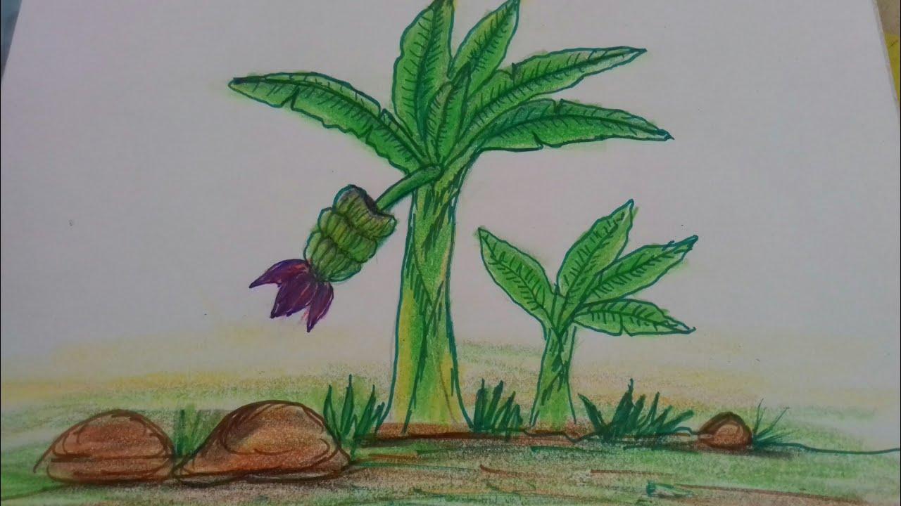 How To Draw A Banana Tree Very Easy Steps Youtube