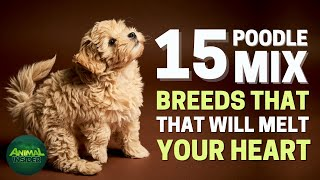 15 Poodle Mix Breed That Will Melt Your Heart
