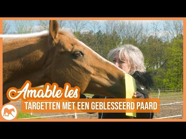 Amable les | Vrijheidsdressuur met een geblesseerd paard