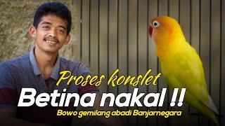 Download lagu SPECIAL LOVEBIRD BETINA - PROSES KONSLET BETINA NAKAL - LOVEBIRD ANDIN Gemilang Abadi Banjarnegara
