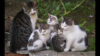 ♯2 トルコ 子猫殺し食べた日本人の件でメディアにお願いをした!