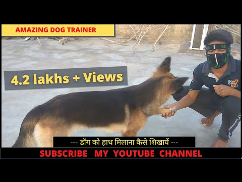 dog training in hindi