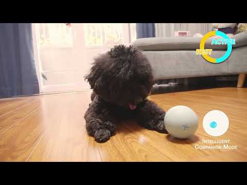 Wicked Ball: A 100% automatic ball to keep your pets company all day