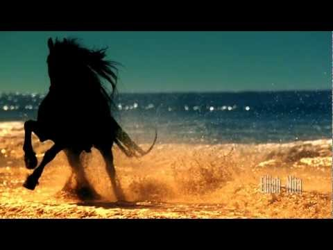 Magic of Horses - Die Magie der Pferde ( Video HD )
