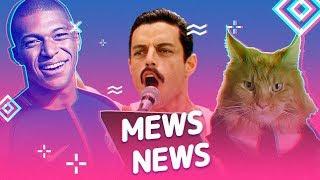 Mews News: Лучшие коты подписчиков