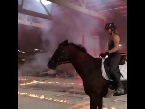 Как готовят лошадей к стрессу.