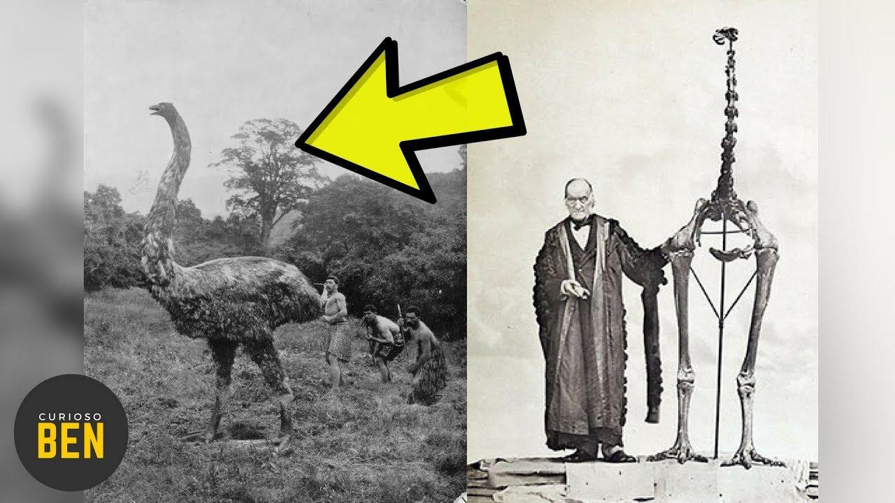10-animales-extintos-por-culpa-del-ser-humano