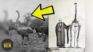 10 Animales Extintos Por Culpa Del Ser Humano