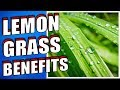 13 Health Benefits of Lemongrass YOU NEED TO KNOW
