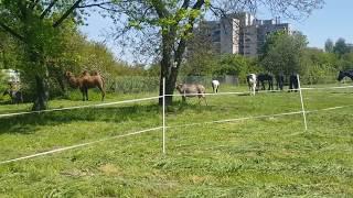 Pasące sie zwierzęta cyrku Safari na wybiegu.