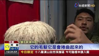奇!台灣南部潮間帶石頭竟會長頭髮 thumbnail