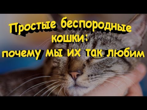 Вопрос: На что может обидеться кошка?