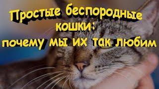 Простые беспородные кошки Почему мы их так любим  Simple pedigree cats