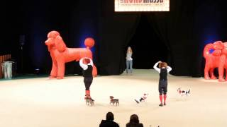 Gammeldans med svans på Stockholm Hundmässa 2013