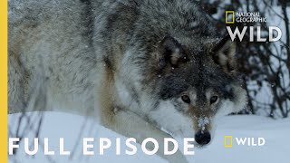 Land of Ice and Snow (Full Episode) | Wild Nordic