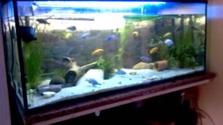 Akwarium pyszczaki  African Cichlids 300 l