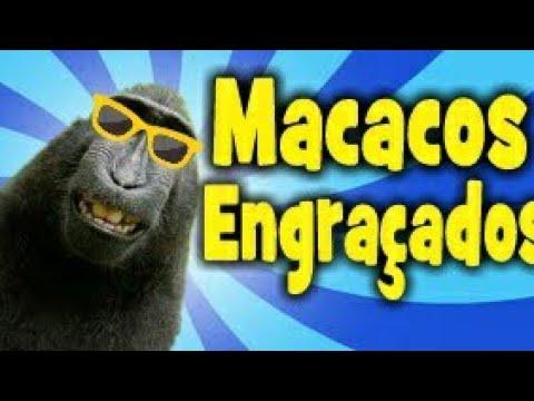 TOP 10 MACACOS ENGRAÇADOS -Funny monkeys  -Duvido vc não rir