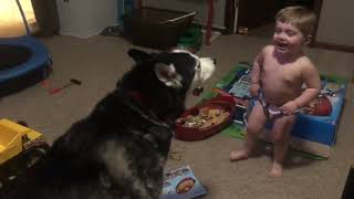 Baby talks with a husky and enjoys