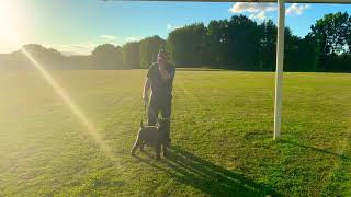 Kerry Blue Terrier Speed Test