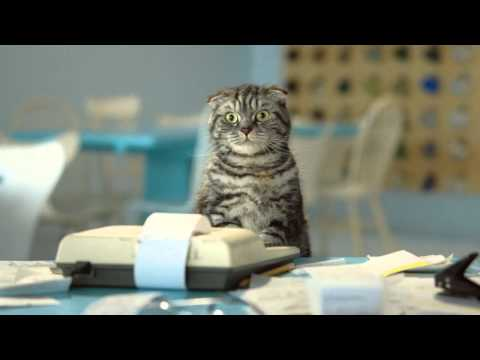 FINN jobb. En real katte-massasje