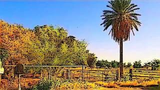 Arizona's Rural Life - Sonora Desert Farming